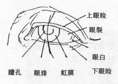 美术专业考试素描五官的技巧和图解