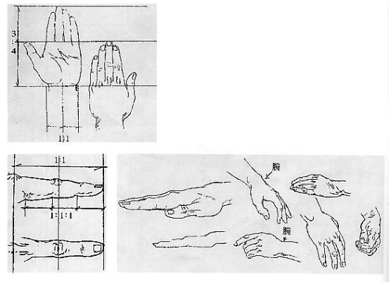 美术速写人物形体比例与结构