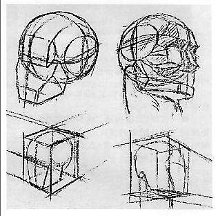画长骨的结构的步骤