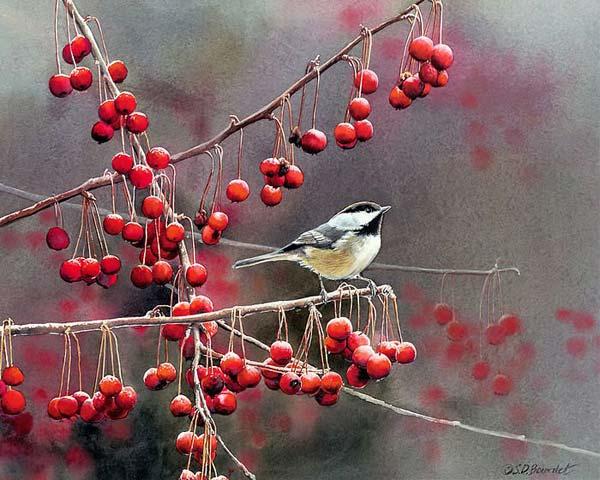 Susan Bourdet花鸟系列国画欣赏